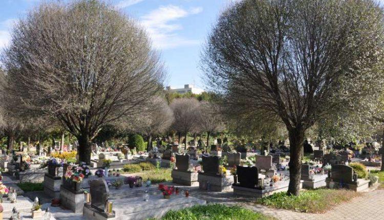 Cintorínske višne pôjdu čoskoro k zemi