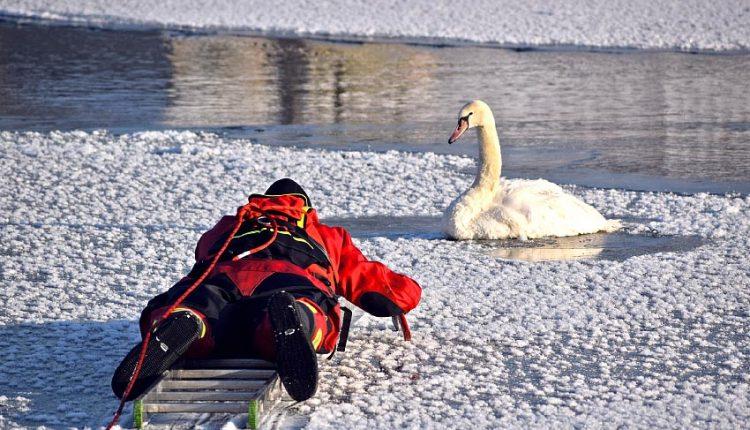 Obetaví púchovskí hasiči zachránili labutí život
