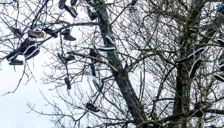 V  meste Púchov nájdete strom s nezvyčajnou výzdobou