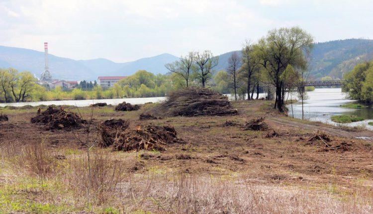 Lužný lesík vyrúbali zbytočne, umelý trávnik sa tu nevybuduje