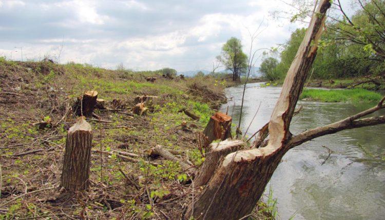 Miroslav Kubičár: Zamyslenie sa nad výrubom lužného lesíka