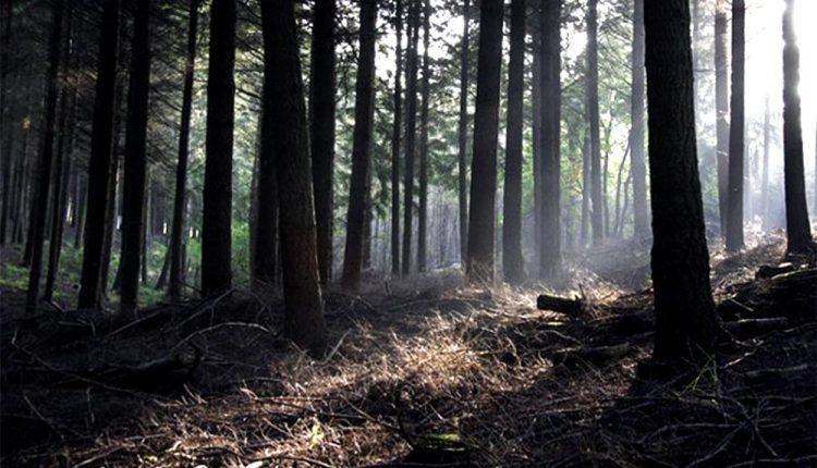 V lese pri Zubáku našli obesenú osobu