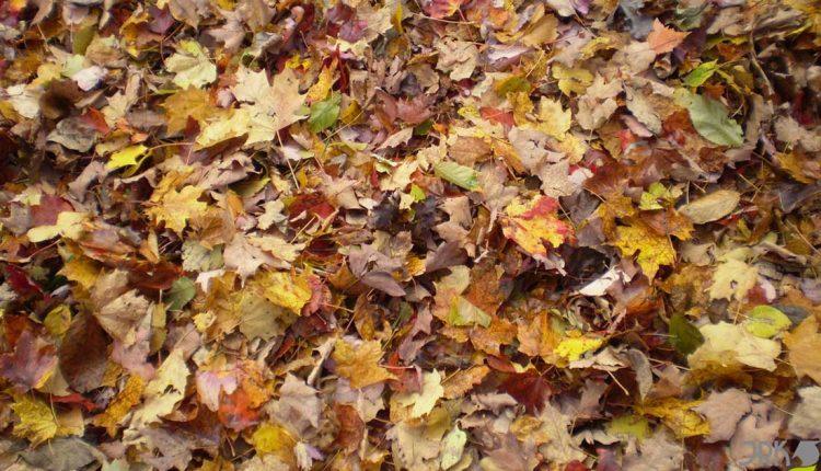 Kompostovanie lístia v domácich kompostéroch