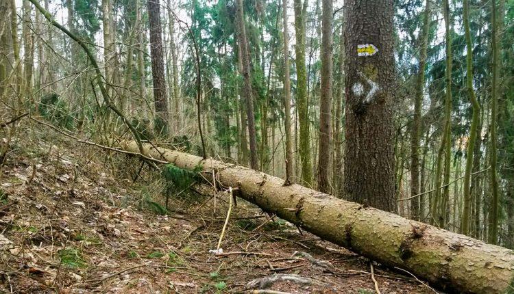 Lesy SR žiadajú výrazne nižší nájom, platiť chcú len 200 eur ročne