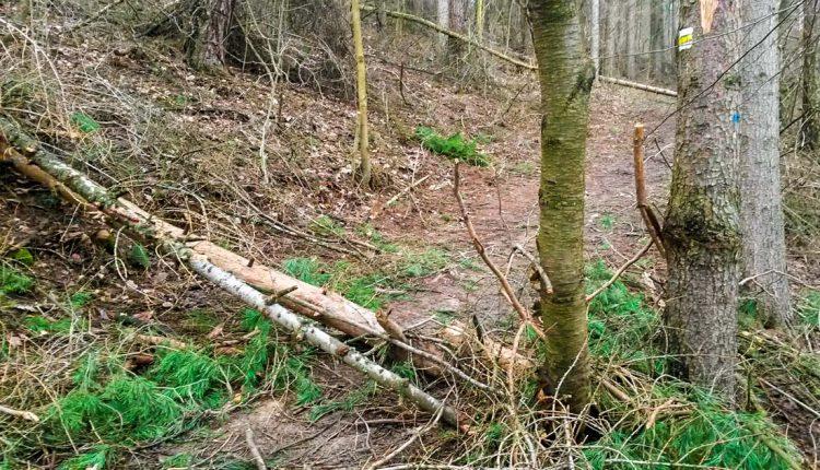 Stanovisko MsÚ k ťažbe dreva na Lachovci – Ilonka