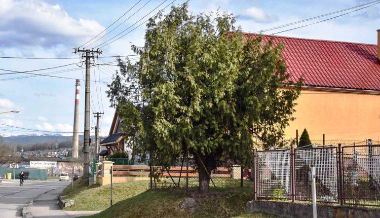 Energetici žiadajú majiteľov pozemkov, aby si orezali porasty pod elektrickým vedením
