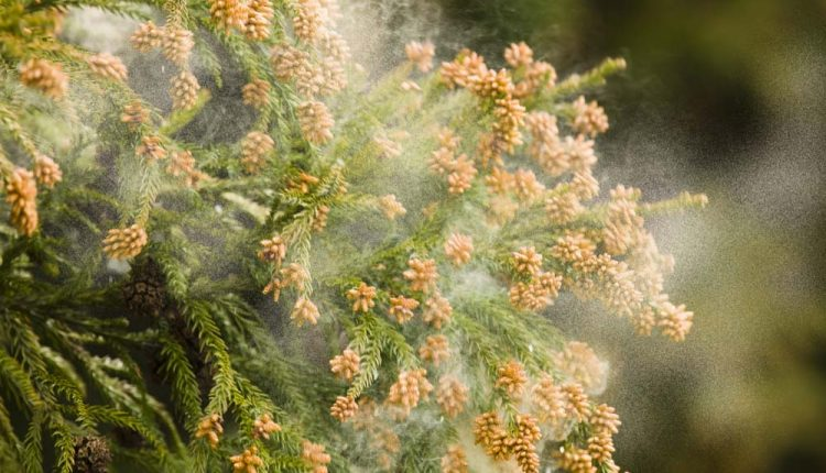 Alergici tento rok prežívajú pomerne hektický štart peľovej sezóny