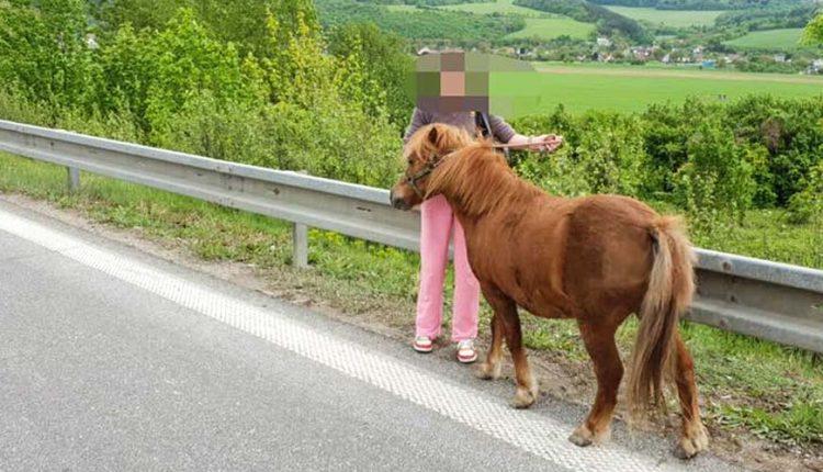 FOTO: Po diaľnici sa prechádzal poník Falco