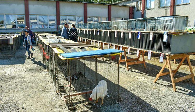 Vážska výstava zvierat v Beluši