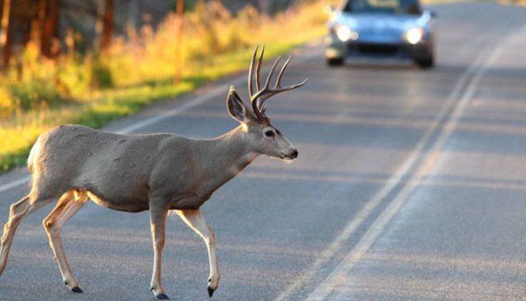 Pozor na dopravné nehody so zverou