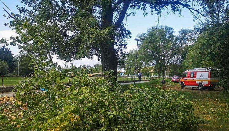 FOTO: Silný vietor robí problémy, strom usmrtil malé dieťa