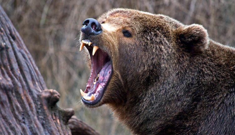 Neďaleko Púchova napadol medveď poľovníka