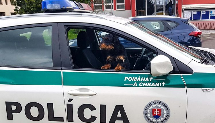 Púchovskí policajti našli majiteľa zatúlaného psíka