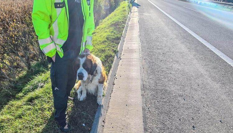 FOTO: Po diaľnici behal zatúlaný psík
