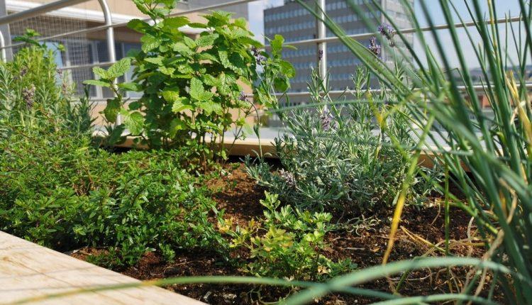 Zelené aktivity Trenčianskej župy budú pokračovať aj v tomto roku